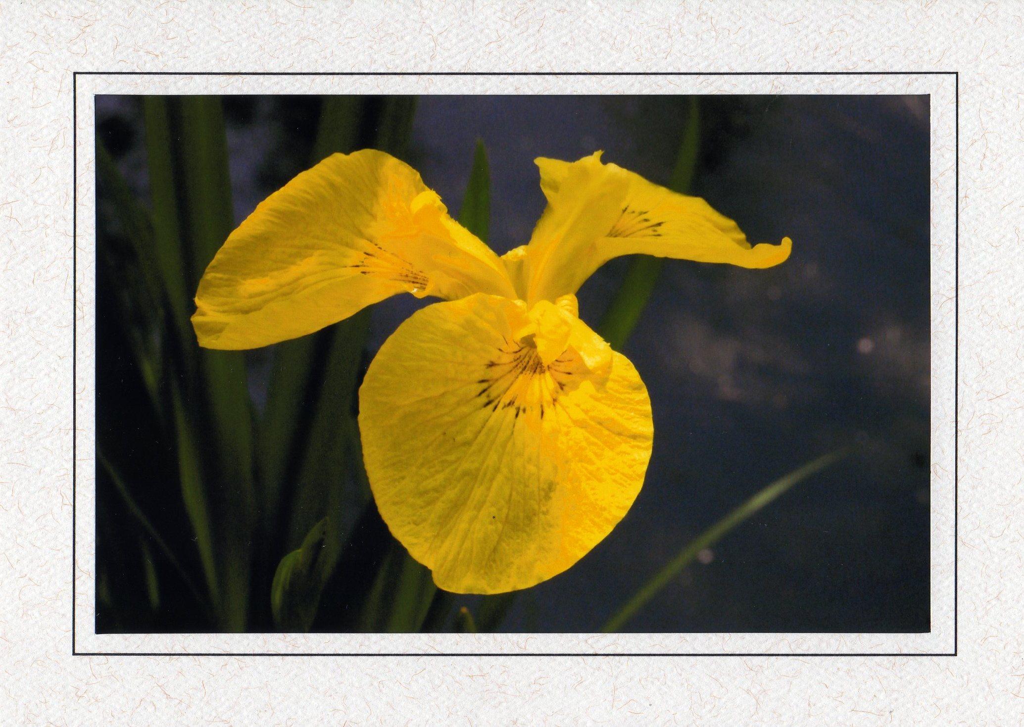 YellowSolo